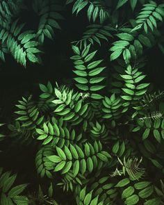 Plants wallpaper nature ideas for 2019 Wallpaper Texture, Green Leaf Wallpaper, Fern Wallpaper, Wallpaper Backgrounds, Iphone Wallpaper, Wallpaper Ideas, Wallpaper Decor, Wallpaper Iphone Tumblr Boho, Bohemian Wallpaper