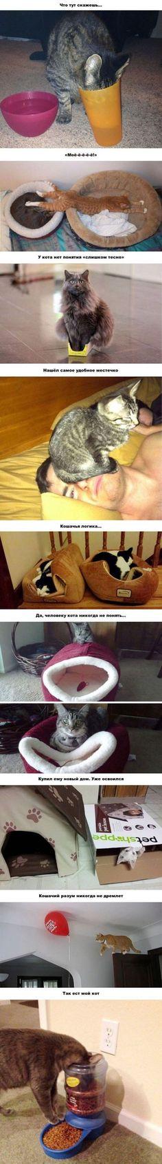 20 забавных примеров железной кошачьей логики.