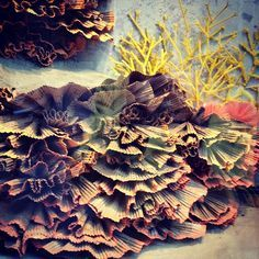 Image result for anthropologie window display under the sea