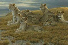 Family Gathering - Lioness and Cubs - Robert Bateman