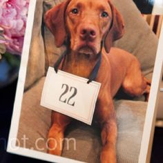 Table number cards. Perfect for our wedding because he tied a note around our dog's next as part of my proposal. So it fits our story :)