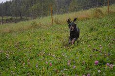 Gårdstunet Hundepensjonat: Vått og grått, men deilig å strekke på beina!