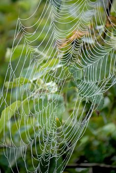 **spider web two by sandy from gardenpath/ flickr.com