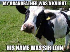 Random Funny Memes (12 Pics)