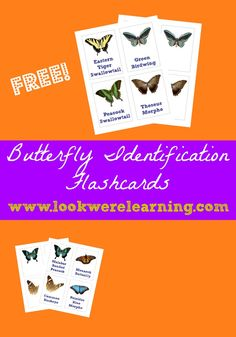 Free Butterfly Identification Cards from Look! We're Learning!
