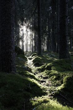 caitlingillam: Forest walk by John Persson on Flickr.