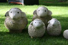 Schafherde, gesehen im Garten in Poperinge, Belgien - Foto Birgit Puck