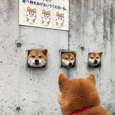 (´≝ ⊖ ≝` )お疲れやで!: Photo