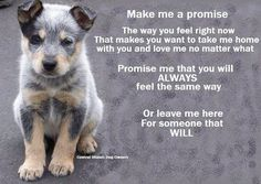 Never make a promise to an animal & break it, they're like babies, they won't understand