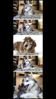 Pun Husky Funny Husky Meme Funny Husky Quote Th - Funny Dog Quotes - Pun Husky Funny Husky Meme Funny Husky Quote The post Pun Husky appeared first on Gag Dad. The post Pun Husky Funny Husky Meme Funny Husky Quote Th appeared first on Gag Dad. Pun Husky, Husky Jokes, Funny Husky Meme, Funny Dog Jokes, Funny Cute Memes, Puns Jokes, Corny Jokes, Funny Animal Jokes, Dog Quotes Funny