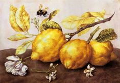 Still Life with Lemons and a Bee, Giovanna Garzoni, 1600-1670
