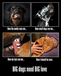BIG Dogs need BIG Love! Had the top left and she was the best Rottweiler ever. Bottom left is my Mocha and she is amazing :) Large Dog Breeds, Large Dogs, Small Dogs, I Love Dogs, Puppy Love, Animals And Pets, Cute Animals, Funny Animals, Dog Rules