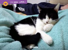 Este gatinho já foi adotado, mas temos muitos outros que estão em busca de um lar.   Marque uma visita através do e-mail catlandrescue@gmail.com ou de nossa fanpage. Nossos gatinhos agradecem! :)