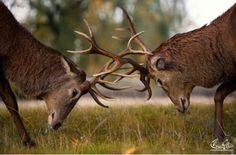 wildlife photography | Magnificent Nature Photography (35 pics) - Izismile.com #beautifulview #photography #lomo