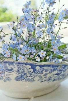 """Forget Me Nots"" in blue and white bowl."