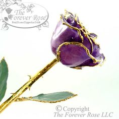 The 24K Gold and Purple Forever Rose! Girls LOVE purple... so get her one now!