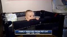 Family Calls 911 When Angry Fat Cat Holds Them Hostage