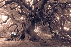 Millenary Olive tree by Ringhio. Please Like http://fb.me/go4photos and Follow @go4fotos Thank You. :-)