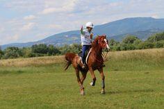 Yessssssss Horses, Lifestyle, Animals, Animales, Animaux, Horse, Words, Animal, Animais