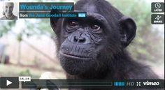 Wounda's Story | the Jane Goodall Institute