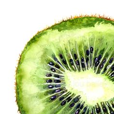 """Fruit Squares"" series #2: 'Kiwi Slice' A watercolor painting of a juicy, green kiwi slice by Cindy Lou Bailey. I truly enjoyed painting the beautiful, jewel-like structure of the fleshy kiwi. SO vibrant! I used Winsor & Newton watercolors on 140 lb...."