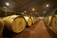 Inside the Fratelli winery, the barrels of SETTE