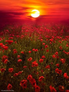 So beautiful I want to live where I can see the sunset and have a field of flowers right in front of me :)