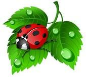 Ladybugs Illustrations and Clipart. 4259 ladybugs royalty free illustrations, and drawings available to search from over 15 stock vector EPS...