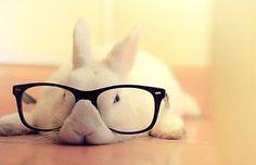 Quiero un conejo