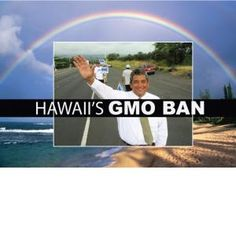 Hawaii's GMO Ban Is Now Official! Mayor Kenoi Signs Bill 113. Thank you Hawaii, now maybe California will do the same, I hope...  Big win! Smart Health Talk tried to support Hawaii's efforts for 2+ yrs. Ever since Elle Cochran introduced first GMO labeling bill.  Huge grassroots effort. Considering Hawaii central location of Monsanto's research farms, where most all GMO seeds are grown, & recent GMO Pineapple push, huge win…