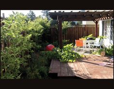 small yard with fruit trees