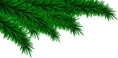 Pine Branch, Branches, Christmas Illustration, High Quality Images, Art Images, Plant Leaves, Clip Art, Plants, Decorating