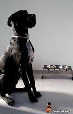 Beleram disfruta de su comedero elevado Design, de diseño exclusivo personalizado con su nombre.