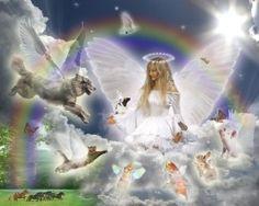 angel of animals