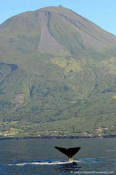 Pico. Açores.