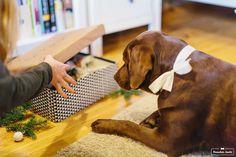DIY Weihnachtsgeschenk für den Hund von Herrchen kocht // www.herrchenkocht.de