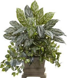Mixed Silver Queen, Wandering Jew and Fittonia Desk Top Plant in Planter