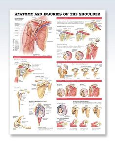 Injuries of the Shoulder anatomy poster