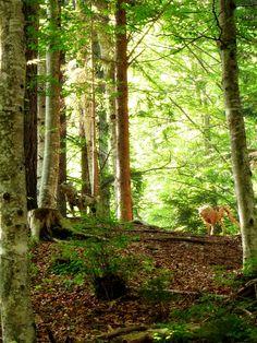 Lobos / Wolves de Sally Matthews (2002)