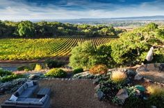 Sonoma County Has 450 Wineries. We Found the 11 Best for Wine Tastings: Paradise Ridge Winery in Sonoma County: Where Samurai Met Sonoma