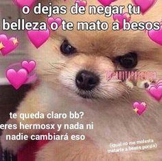 Photo by Heidi Lepak Cute Love Memes, Funny Love, Romantic Memes, Cute Phrases, Disney Princess Fashion, Miraculous Ladybug Memes, Spanish Memes, Mood Pics, Beautiful Cats
