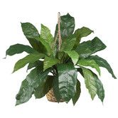 Found it at Wayfair - Nearly Natural Birds Nest Fern Hanging Plant in Basket