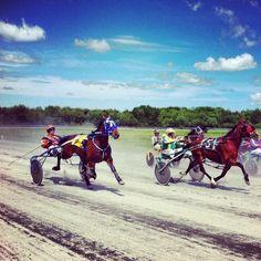 Harness racing at Northside Downs    photo credit: Ryan Singler