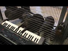 Over the weekend, the Smithsonian's National Zoo gave a few of their otters a keyboard as part of their enrichment program. And from the looks of it, they seem to be enjoying their new toy. | This Video Of A Bunch Of Otters Playing The Keyboard Will Make Your Day