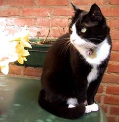 I love black and white cats.    Me too! I have one kind of like this! I could look at her all day long!