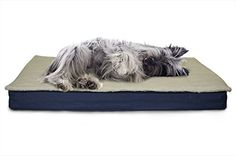 Furhaven Pet Dog Bed - Convertible Sherpa Panel Water-Resistant Outdoor Pillow Cushion Traditional Mattress Pet Bed w/ Removable Cover for Dogs & Cats, Marine Blue, Small Raised Dog Beds, Dog Beds For Small Dogs, Dog Pillow Bed, Dog Shower, Dog Diapers, Outdoor Dog, Dog Cat, Pets