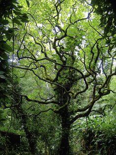 Rain forest ~ Oahu