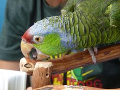 "SoCal Parrot, the only local nonprofit which rescues wild parrots in our region, invites the public to  ""Picnic with the Parrots"" on October..."