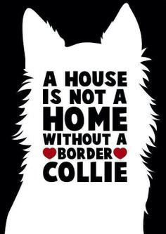 border collies forever!!!