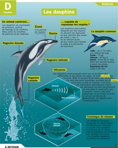 Science infographic and charts documentaires … Infographic Description documentaires More – Infographic Source – Science Projects For Kids, Science For Kids, French Class, French Lessons, Study French, French Education, French Expressions, French Resources, Body Drawing